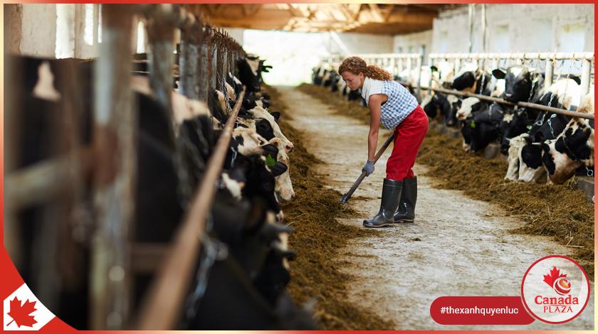 Sự thiếu hụt lao động nông nghiệp trong lệnh cấm nhập cảnh trong dịch COVID-19