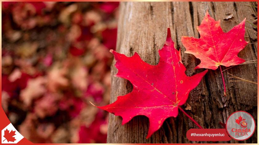 7 bí quyết thành công cho người mới đến Canada