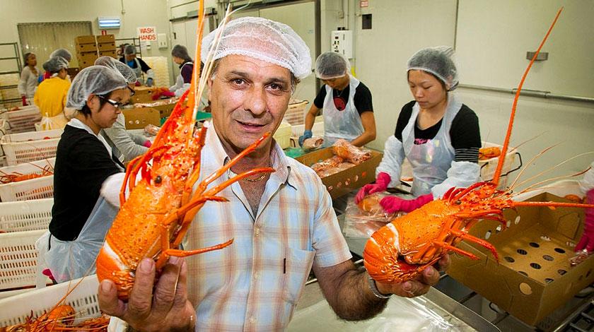 Công nhân - Nhà máy tôm (Worker - Lobster Factory)