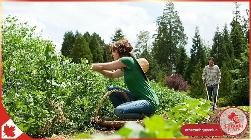Chương trình thí điểm nhập cư lĩnh vực nông nghiệp thực phẩm (AFIP) 1