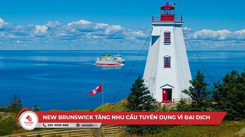 New Brunswick tăng nhu cầu tuyển dụng vì đại dịch